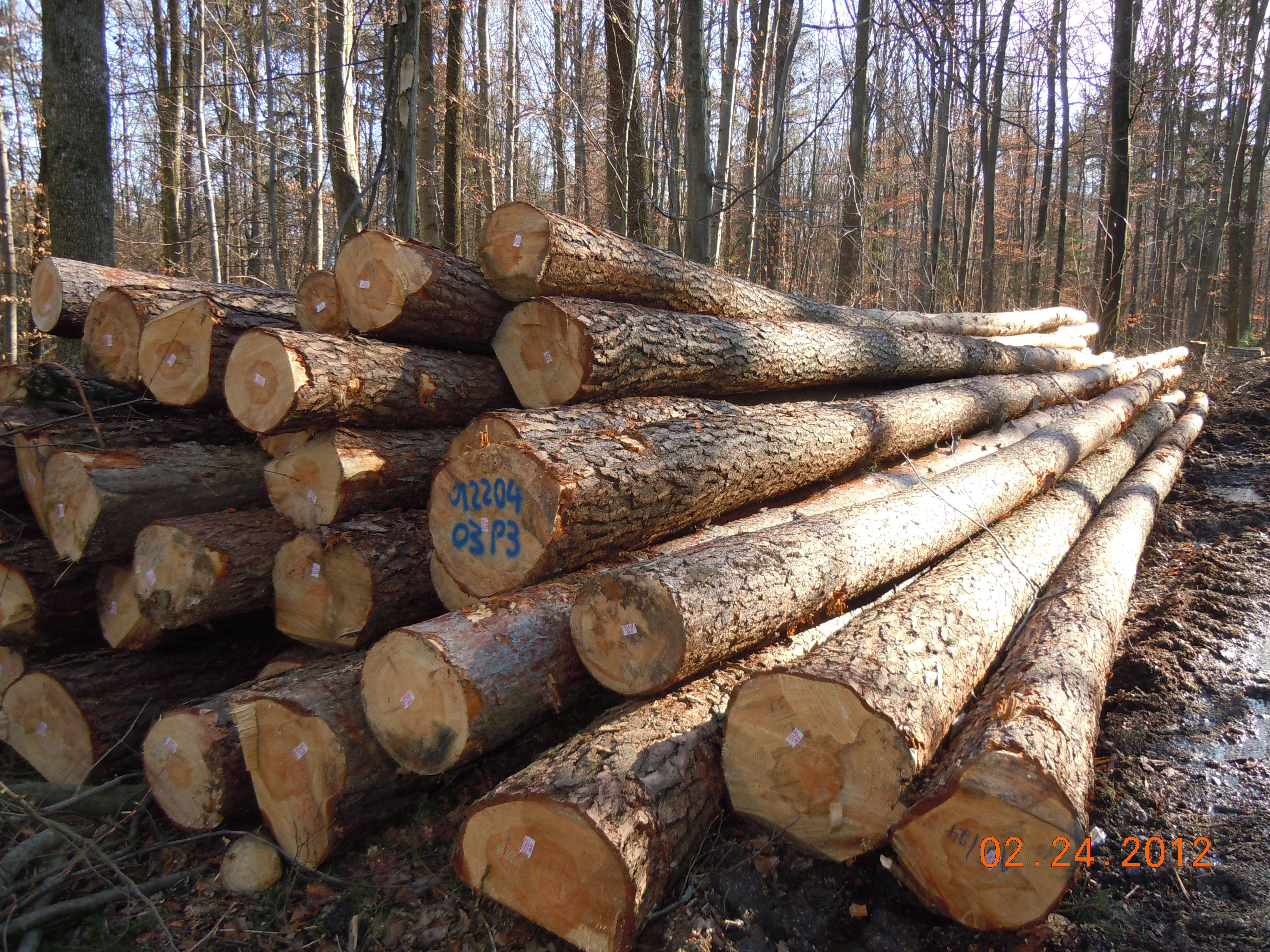 Madera de pino arbol images - Madera de pino ...